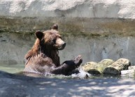 The Toledo Zoo, located in the old South End neighborhood of Toledo, is rated as one of the ten best in the country., Highlights include the Hippoquarium, The Primate Forest, African Savanna, Arctic Encounter and a Children's Zoo.