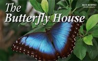 The Butterfly House, located in nearby Whitehouse, Ohio, offers visitors the opportunity to view hundreds of species of butterflies in a beautiful enclosed garden setting.